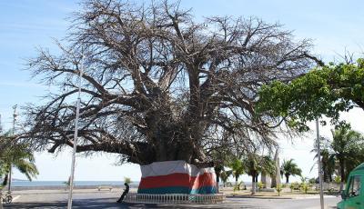 Majunga - Ville Baobab